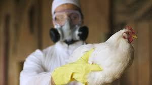 Российские исследователи дали отпор птичьему гриппу