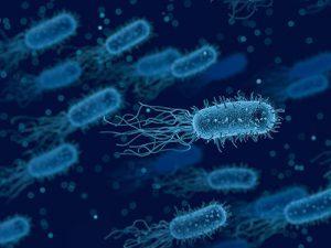 Бактерии в моче не всегда говорят о необходимости лечения