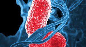 Самые стойкие бактерии возможно уничтожить, уверены специалисты