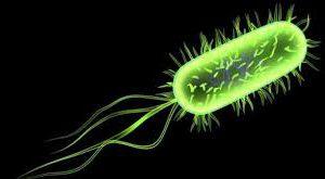 Список самых опасных в мире бактерий, устойчивых к лечению