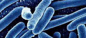 Как справиться с хроническими инфекциями