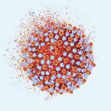 Какой гепатит передается половым путем?