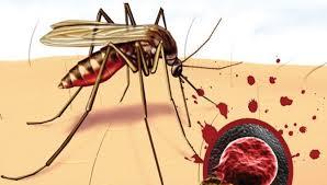 Малярию могут победить уже к 2050 году