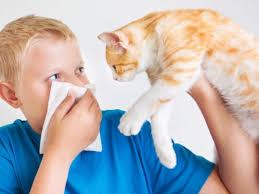 Ученые приблизились к созданию средства против аллергии на кошек