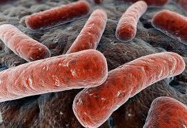 Туберкулез обманывает иммунную систему