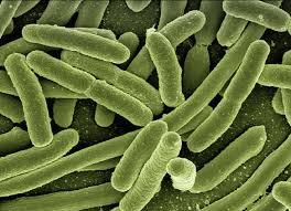 Арктические бактерии позволяют бороться с туберкулезом