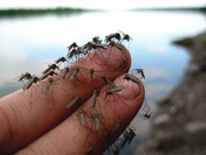 Россиян предупредили об угрозе смертельных лихорадок из-за комаров