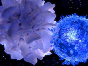 Молекула VISTA не дает иммунной системе бороться с раком