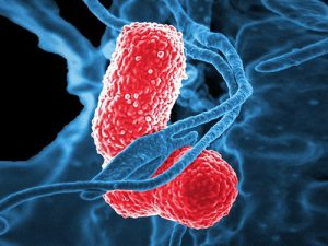 Новый коронавирус вызвал вспышку пневмонии в Китае