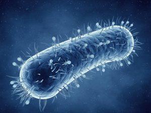 Стало понятно, как бактерии превращаются в вирусы