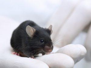 Ученых поставила в ступор новая загадочная болезнь