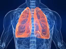 Ученые нашли новый способ регенерации трансплантируемых легких