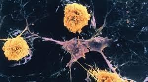 Лекарство от рассеянного склероза может способствовать выздоровлению от COVID-19