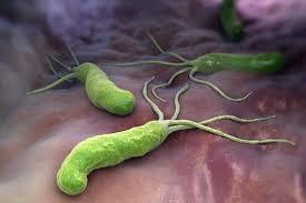 Каким образом Helicobacter pylori подавляет иммунитет