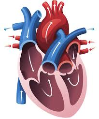 Новое комбинированное средство — настоящий прорыв в кардиологии